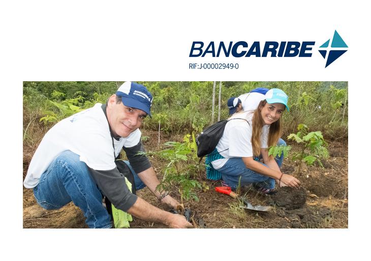 Voluntariado Bancaribe sembró más de 600 árboles en el estado Miranda