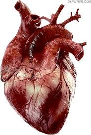 El esfuerzo cardíaco de un músico en un concierto es igual al de un deportista de élite